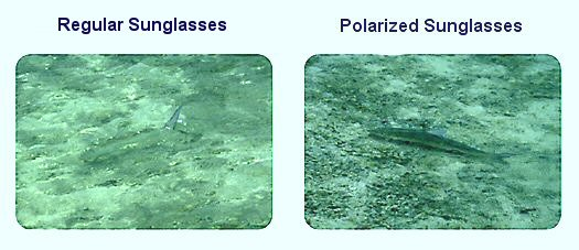 Is Polarised Sunglasses Better  fishing sunglasses polarized sunglasses for fishermen all