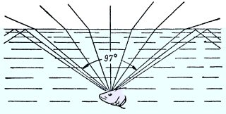 The angle of view of fish