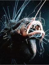 Interesting Fish Facts Angler fish