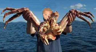 Interesting Fish Facts Largest-Crustacean-Alaskan-King-Crab
