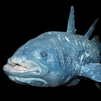 Interesting Fish Facts Oldest Fish