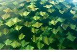 Interesting Fish Facts Stingrays